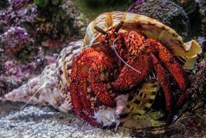 underwater photography of hermit crab