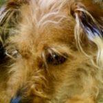 Profile picture of Suzanne van de Velde